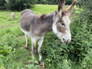 Everyone loves a donkey