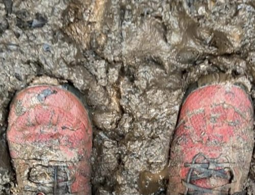 How to Clean Trail Shoes